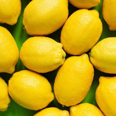 신선플레이 미국산 레몬 17kg 130-140과 중