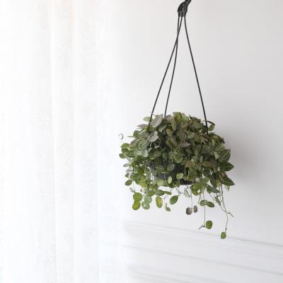 디시디아 멜론 행잉 대형 공기정화식물 행잉플랜트