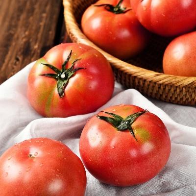 남쪽섬 프리미엄 고당도 완숙 토마토 5kg (3번)