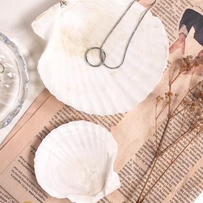 천연 조개 트레이 접시 2size 바다 악세서리 그릇