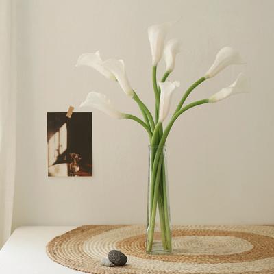 천년의사랑 화이트 에덴 카라꽃 한가지