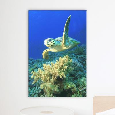 cv603-바다거북이의모험_중형노프레임