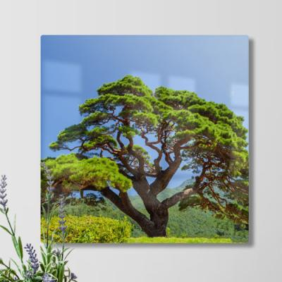 ta808-38CmX38Cm_풍수건강소나무