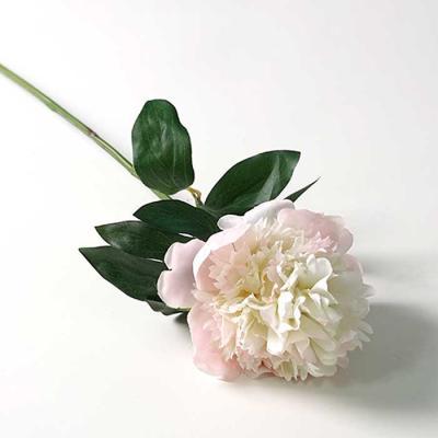 Flower 피어니 가지 2color 55x19cm CH1705720