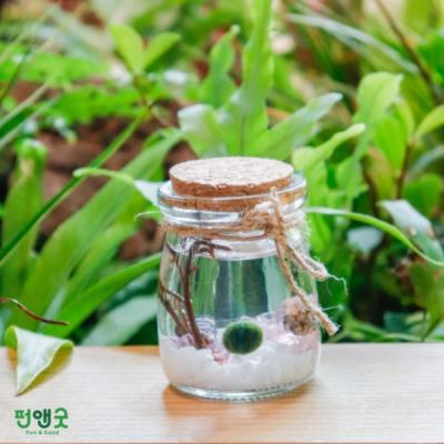 수경재배 반려식물 마리모 어항  푸딩병 선물 세트