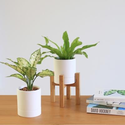 키우기 쉬운 식물 4종 (우드프레임 세트)