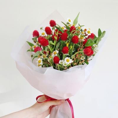 딸기 품은, 천일홍