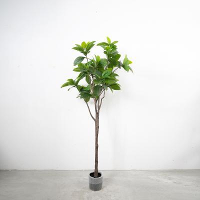 고무나무 180cm