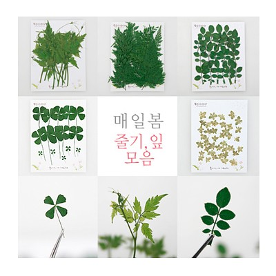 압화[줄기 잎] 미니꽃 [택1-옵션마다 가격상이] -레이스플라워잎(20줄기)