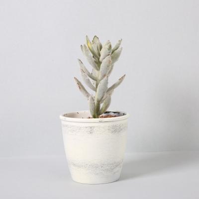 다육식물 다육이 미니화분 싱글다육 22cm
