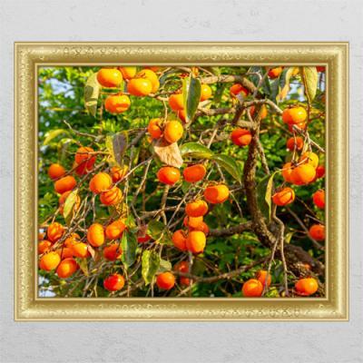 tl073-풍요로운재물의감나무1_창문그림액자