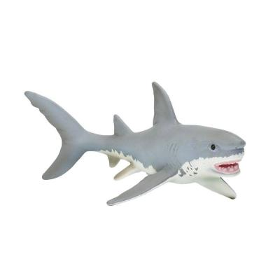 275029 백상어 Great White Shark