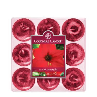 [1+1(랜덤)증정] COLONIAL CANDLE 2855 티라이트 9pk 캔들 다홍색 아미릴리 꽃