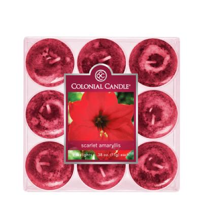 COLONIAL CANDLE 2855 티라이트 9pk 캔들 다홍색 아미릴리 꽃