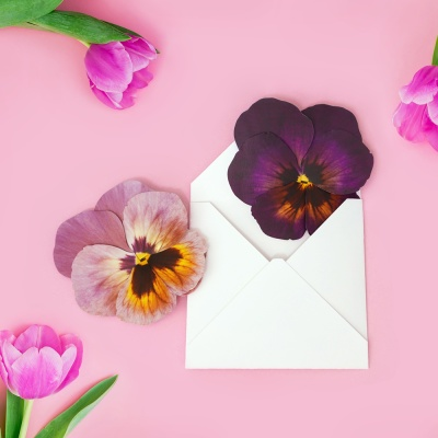 팬지 Ver.2 Pansy Flower card (4color)