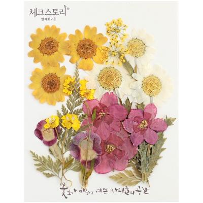 [압화 꽃모음 - A타입] 수선화랑 마가렛 꽃모음