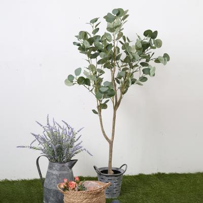 유카리나무 120cm