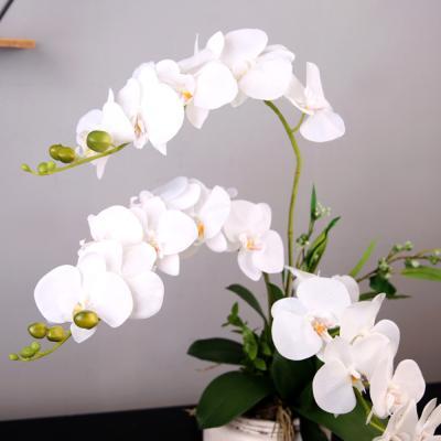 고속터미널꽃시장 호접란 107cm 서양난 동양란