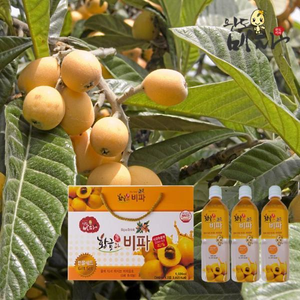 전남 완도 황금과 비파농축쥬스 500mlx3병/4배 희석용