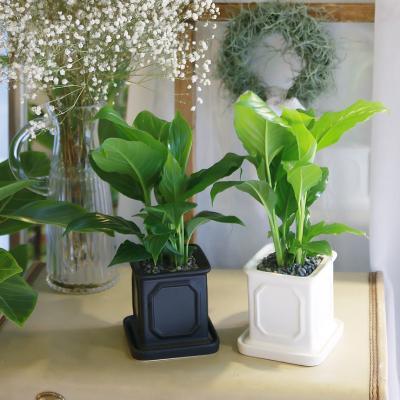 몰딩 화분 스파트필름 공기정화식물