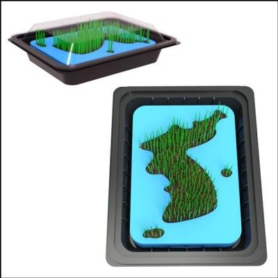 대한민국 잔디 키우기