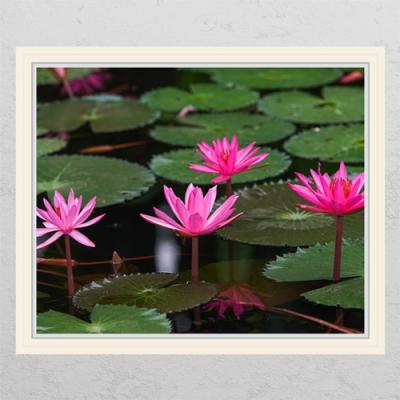 ij983-행복을주는연꽃5_창문그림액자