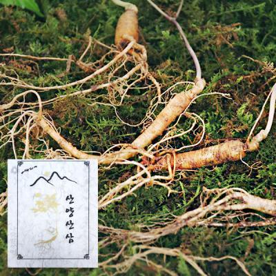 삼장수 산양삼5~6년근 5뿌리 2박스 / 선물포장