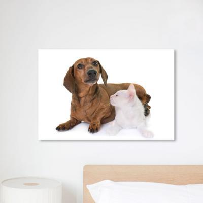 cq171-강아지와고양이친구들_중형노프레임