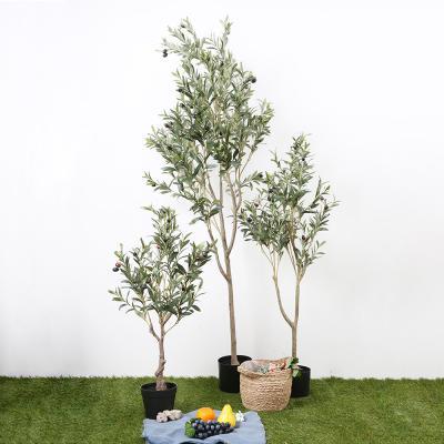 올리브나무 180cm