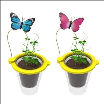 나비와 콩나무