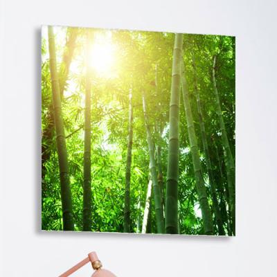 ta617-아크릴액자_햇살아래대나무숲(중형)
