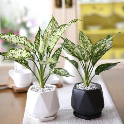 리솜 화분 사파이어 공기정화식물