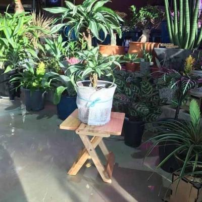 원목 화분 받침대겸용 의자 스텐드(사각)24x24cm