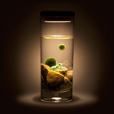 [빛가든] 청개구리 마리모