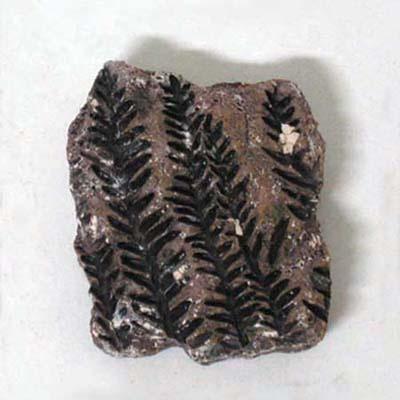 식물화석발굴 - 시길라리아 [PF1]