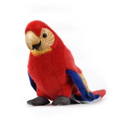 3741번 금강앵무 Cute Scarlet Macaw
