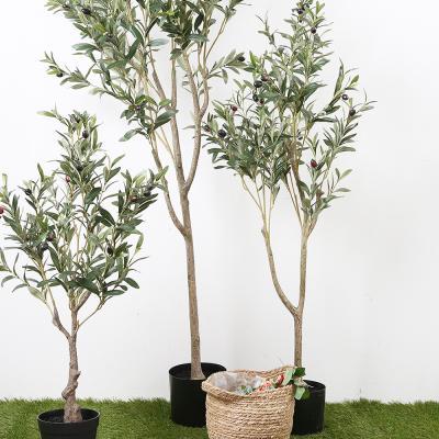 올리브나무 120cm