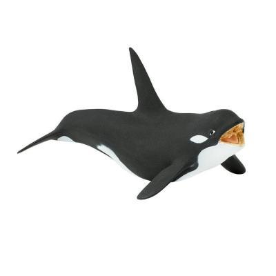 275129 범고래 Killer Whale