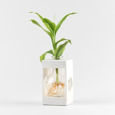 메이크정글 컬러아쿠아플랜트 공기정화식물 수경화분