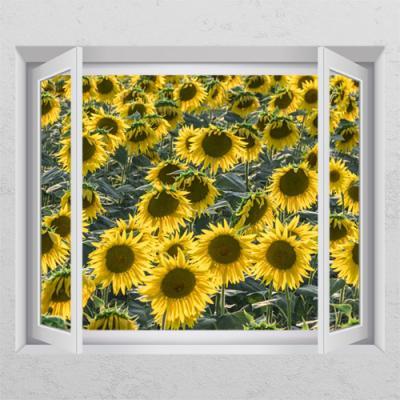 cr601-들판에해바라기꽃_창문그림액자