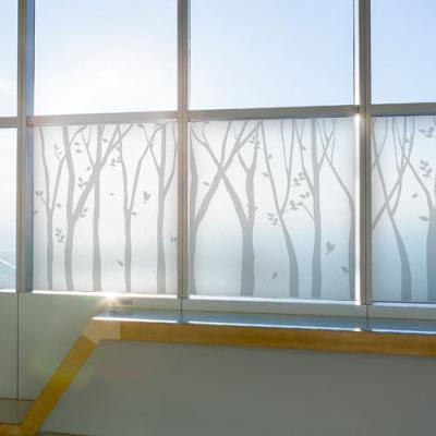 ph629-그레이자작나무숲