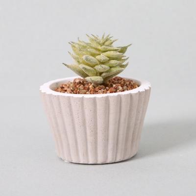 다육식물 다육이 미니화분 싱글다육 8CM