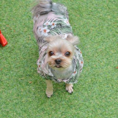 핸드메이드 강아지 알리올리오 커플룩 /강아지셔츠