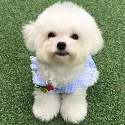 핸드메이드 강아지 하늘하늘 커플룩 /강아지원피스