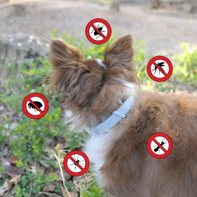 여름산책필수품 오래가는 강아지 진드기 목걸이