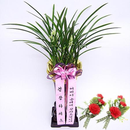 효도동양란(꽃배달,부모님선물,어버이날,스승의날,카네이션,효도선물,전국무료배송)
