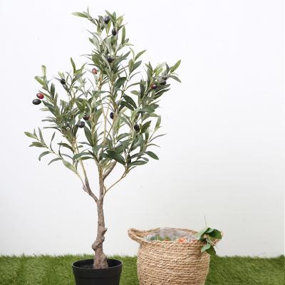 올리브나무 90cm