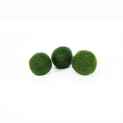 수경식물 국산 마리모 단품