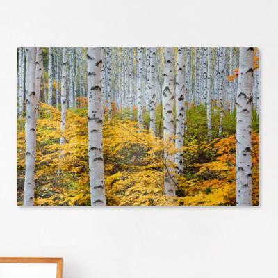 te164-폼아크릴액자58CmX38Cm_가을의자작나무숲
