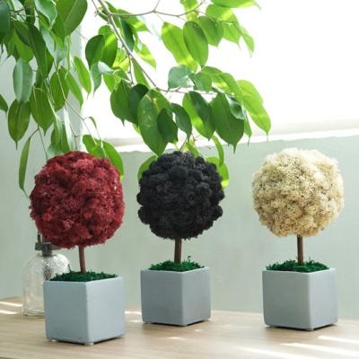 스칸디아모스 시멘트 천연 이끼 나무 화분